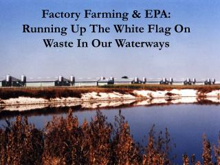 Factory Farming & EPA:  Running  Up The White Flag On Waste In Our Waterways