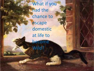 What if you had the chance to escape domestic at life to become Wild?