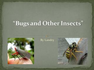 """Bugs and Other Insects"""