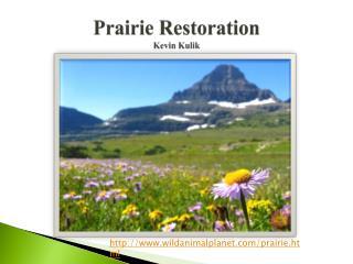 Prairie Restoration Kevin  Kulik