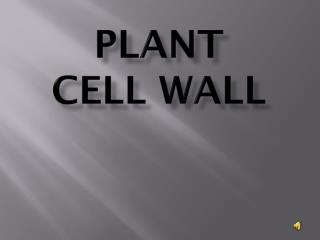 Plant  Cell Wall