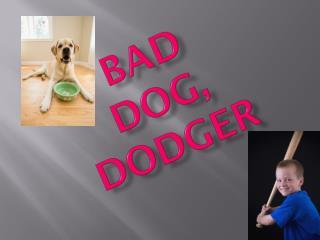 BAD DOG, DODGER