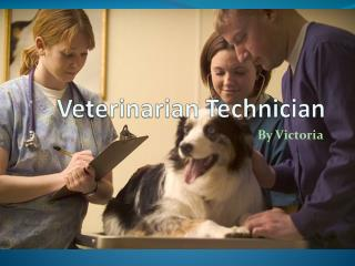 Veterinarian Technician