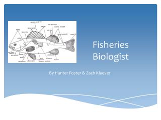 Fisheries Biologist