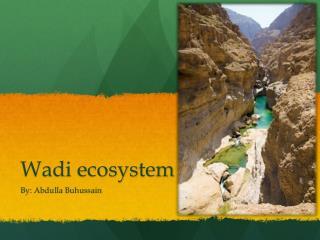 Wadi ecosystem
