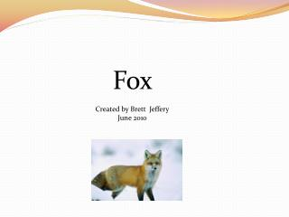 Fox  Created by Brett  Jeffery June 2010