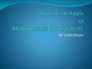 Iowa Crab Apple or Malus Ioensis (Wood) Britt.