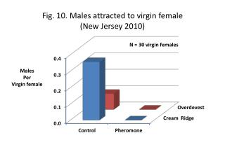 Fig. 10. Males attracted to virgin  female (New  Jersey  2010)