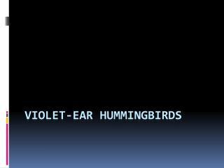 Violet-Ear  Hummingbirds