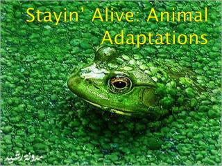 Stayin ' Alive: Animal Adaptations