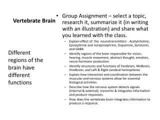 Vertebrate Brain
