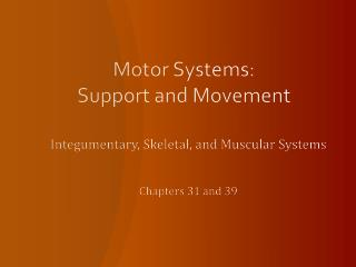 Motor Systems:  Support and Movement