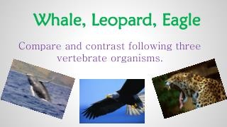 Whale,  Leopard ,  Eagle