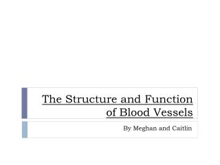 The  Structure  and  Function  of  Blood  V essels