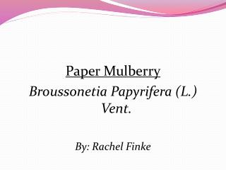 Paper Mulberry Broussonetia Papyrifera  (L.) Vent. By : Rachel Finke