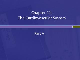 Chapter 11: The Cardiovascular System