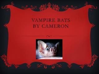 Vampire Bats By  C ameron