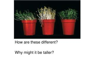 How are these different? Why might it be taller?
