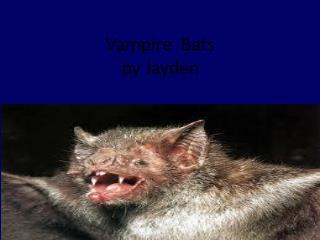 Vampire   Bats by  J ayden