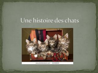 Une histoire des chats