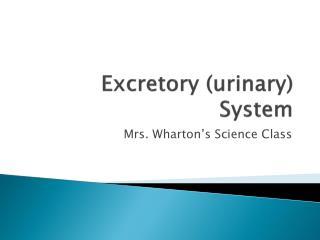Excretory (urinary) System