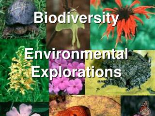 Biodiversity  Environmental Explorations