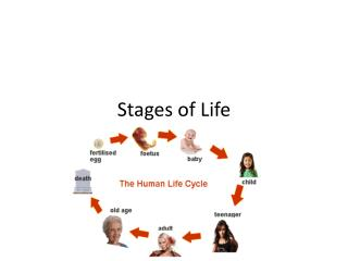 Stages of Life