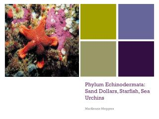 Phylum Echinodermata: Sand Dollars, Starfish, Sea Urchins