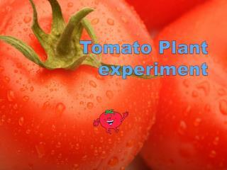 Tomato Plant experiment
