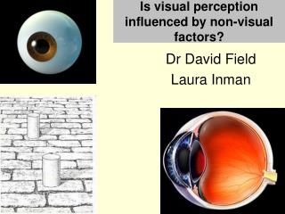 Is visual perception influenced by non-visual factors ?