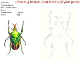 Materials:               Draw bug to take up at least � of your paper. Graphite Pencil