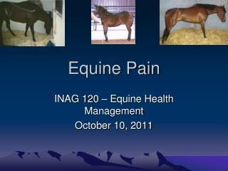 Equine Pain