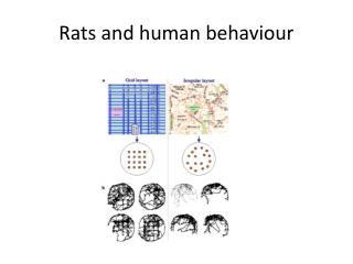 Rats and human behaviour