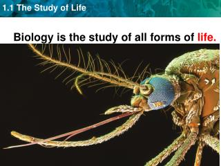 Biology is the study of all forms of  life.