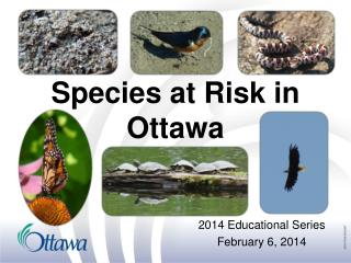 Species at Risk in Ottawa