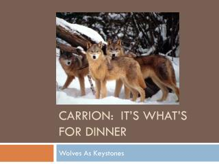 Carrion:  It's what's for dinner