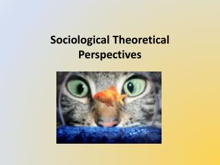 Sociological Theoretical Perspectives