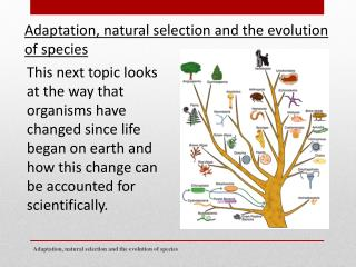 Adaptation, natural selection and the evolution of species