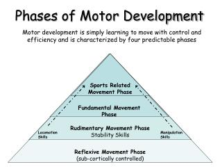 Phases of Motor Development