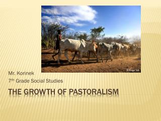 The Growth of  Pastoralism