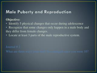 Male Puberty and Reproduction
