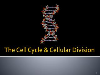 The Cell Cycle & Cellular Division
