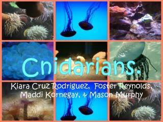 Cnidarians.