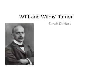 WT1 and  Wilms ' Tumor