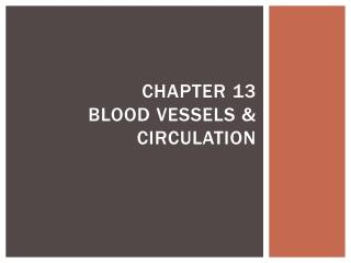 Chapter 13  Blood Vessels & Circulation