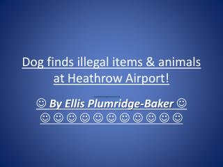 Dog finds illegal items & animals at Heathrow Airport!