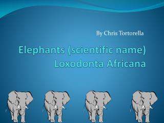 Elephants (scientific name)  Loxodonta  Africana