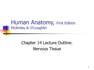 Chapter 17  Nervous Tissue
