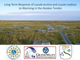 Long-Term Response of  Luzula arctica  and  Luzula confusa  to Warming in the Alaskan Tundra