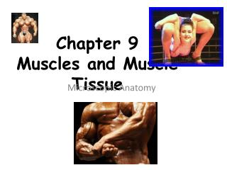 Chapter 9 Muscles and Muscle Tissue